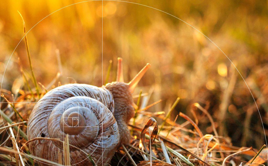 Harmonische Printproduktion in Übereinstimmung mit der Natur.